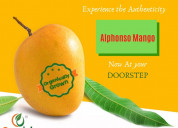 Order organic mangoes |organically grown alphonso