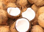 Coconutindia - husked coconuts in india
