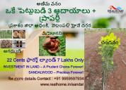22 cents plantation plots in addanki,prakasam dist