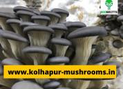 Fresh mushroom edible