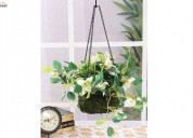 Buy  hanging flower pots to add  beauty in house