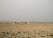 Residential property site for sale at dholera