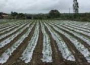 Treadle pump in india  | irrigation driplines supp