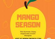 Mango online shopping india