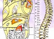 Diploma in spine reflexology