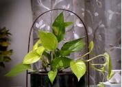 Get designer marble indoor planters in best price
