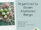 Organically grown alphonso mango online