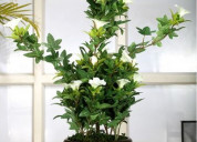 Get stylish flower planters online at woodenstreet