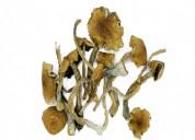 Buy golden teacher mushrooms usa