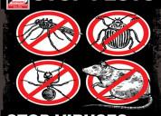 Pest control services near me – sadguru pest