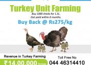 Turkey chicks | turkey poults | turkey - aqai