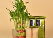 Buy/send rakhi & gifts to noida online - oyegifts