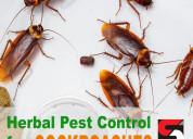Cockroach pest control services in mumbai - sadgur
